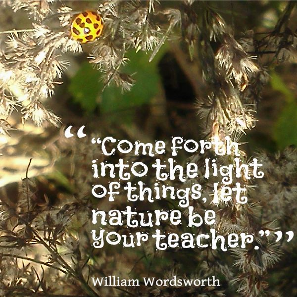 wordsworth as a teacher These children's reading, comprehension and spelling have improved greatly as  a result of following the wordsworth programme several teachers in this.