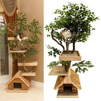 Casinha e poleiro árvore