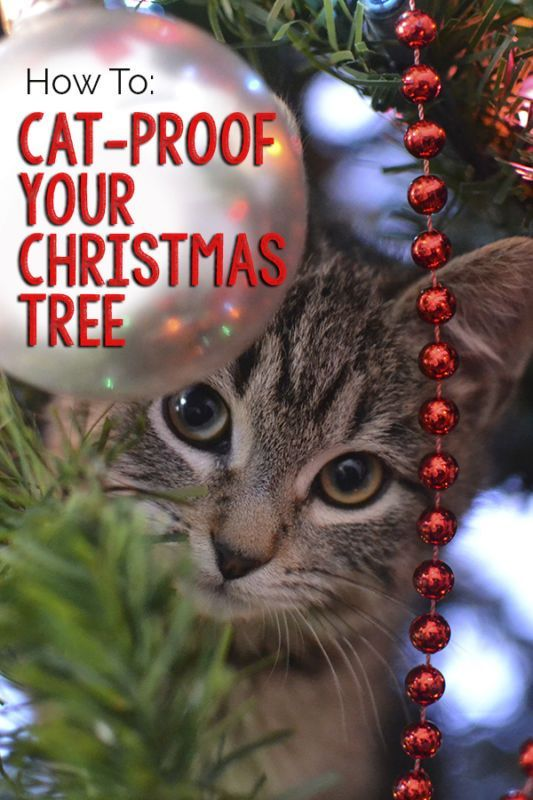 Here are some great tips on how to keep your cat from destroying the Christmas tree