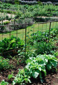 Pomodori, fagioli, piselli, cetrioli. Come costruire i sostegni per gli ortaggi