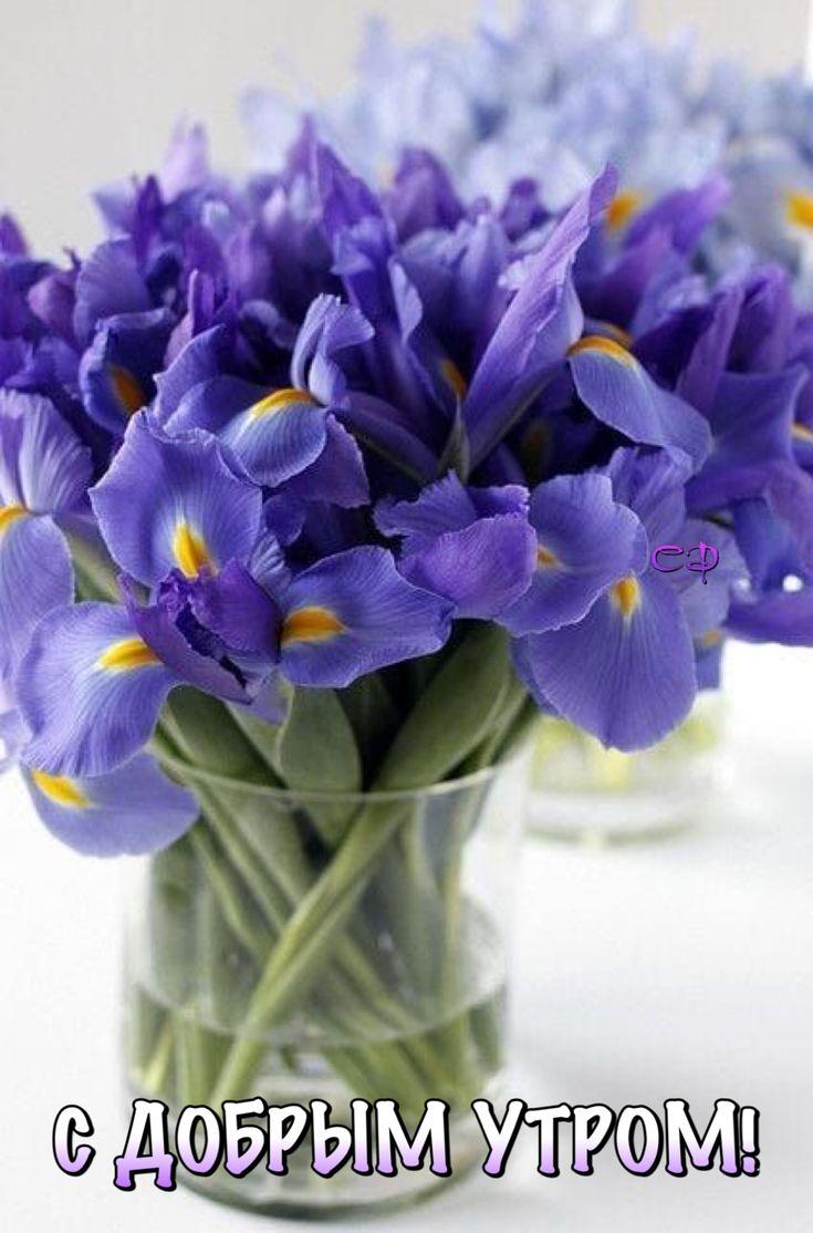 Про, красивые букеты цветов картинки с добрым утром