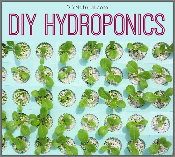 best 25 homemade hydroponic system ideas only on pinterest hydroponics system hydroponic systems and homemade hydroponics