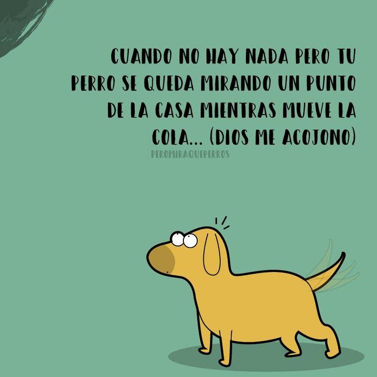 La verdad que es para morirse de miedo... ArtBy Peromiraqueperros #perros #perritos #mascotas #adorable #bonito #regalos #gift #tiendademascotas #perruno #regalomascotas #petlovers #can #canino #peludos #divertido #taza #animales #tazasperros #gatos #perrospequeños #razasdeperros #paraperros #collaresperros #collaresmascotas #casaperro #tazasperros