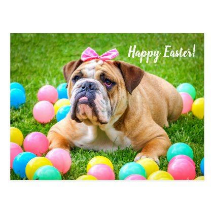Bulldog funny Easter photo Postcard - stylish gifts unique cool diy customize