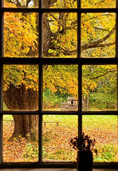 view through wood paned window of tree and yard..best viewed while holding cup of morning coffee...
