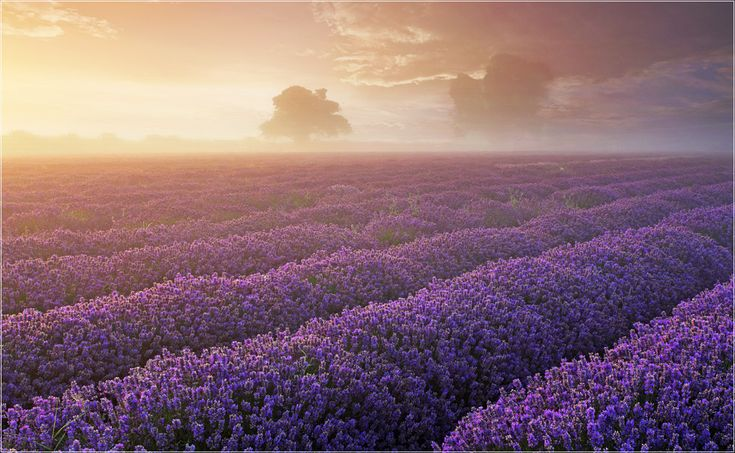 i can smell the lavender while looking at this one. gorgeous.