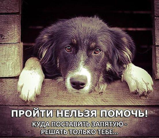 """Муж сказал:""""Не нужен пёс нам в доме""""... » Женский Мир"""