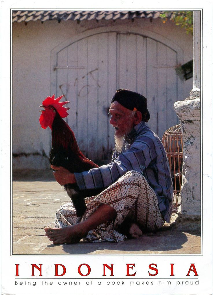 INDONESIA (Java) - Being the owner of a cock makes him proud