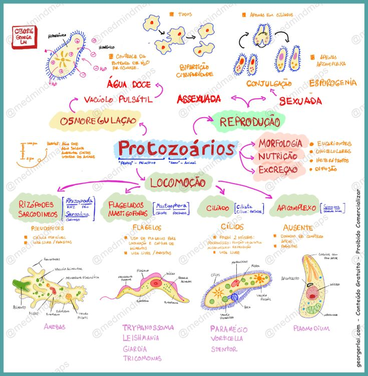 mapa mental, biologia, protozoários, célula