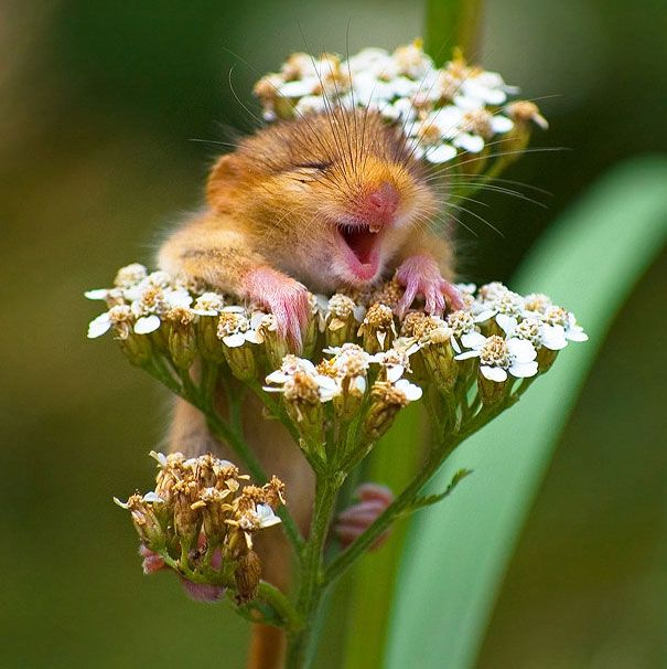 This is the happiest animal I have ever seen // its happiness is contagious.
