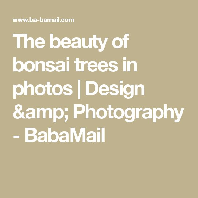 The beauty of bonsai trees in photos | Design & Photography - BabaMail
