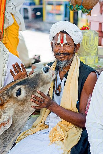 Baba (Hindu holy man) with cow - Orchha (India)