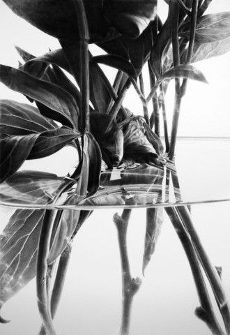Looking Glass - SOLD by Haywood | PLATFORMstore. Charcoal on paper