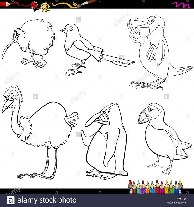 10 beste malvorlagen vögel denkweise 2020  malvorlagen