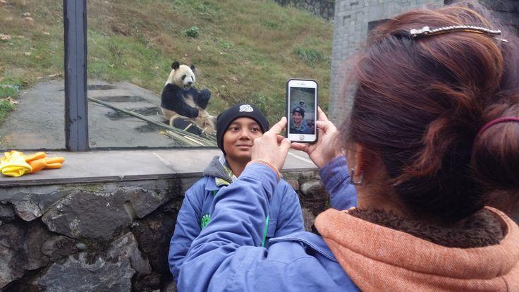 chengdu panda volunteer: www.westchinago.com info@westchinago.com