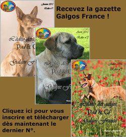 L'Anxiété de Séparation - Galgos France