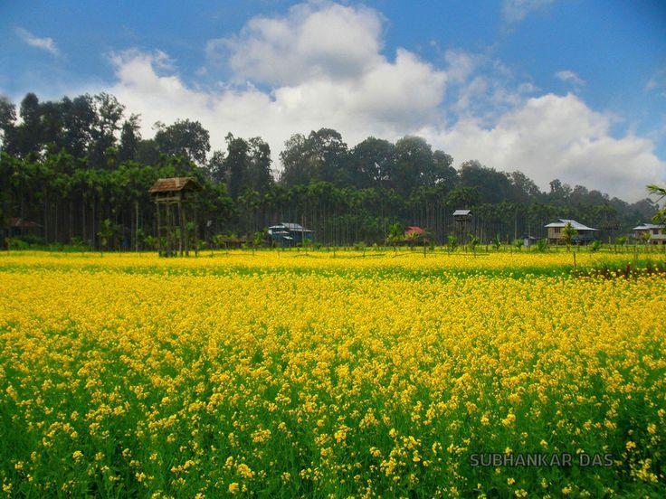 Buxa Tiger Reserve (Santalabari) - near Alipurduar, West Bengal