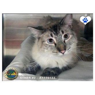 PRINCESS | Humane Society of the Palm Beaches | West Palm Beach, Florida | Pets.Overstock.com