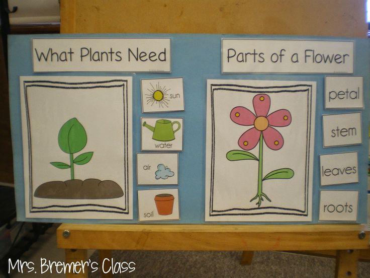 Plant Anchor Chart Spring Pinterest