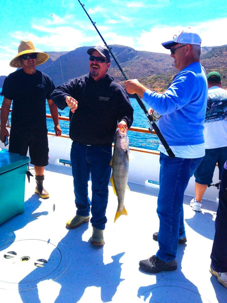 1000 images about white seabass fishing with channel for Channel islands fishing
