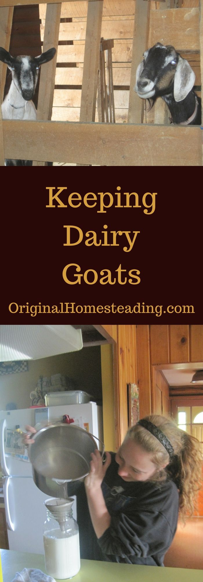 Keeping Dairy Goats.......A small two nanny plan may be just perfect for your family!!!