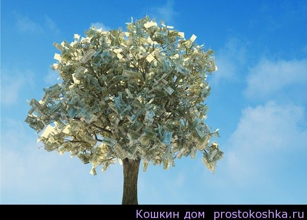 Как правильно вырастить «денежное» дерево, чтобы привлечь материальное благополучие. На растущей Луне приобретите керамический горшок зеленого или черного цвета и само «денежное» деревце, а еще лучше — его саженец. Пересаживать растение нужно обязательно в среду. А перед пересадкой положите на … Читать далее →