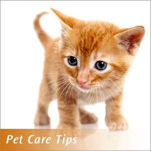 17 best images about pet care tips on pinterest pet care tips for