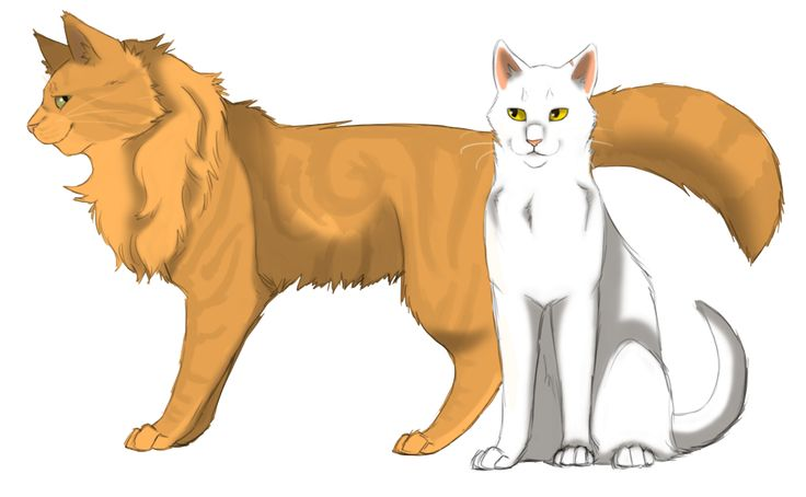 Lionheart and Whitestorm Warrior cats (my two favorite cat characters along with graypaw/graystripe)