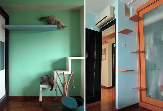 DIY cat climber from shelves
