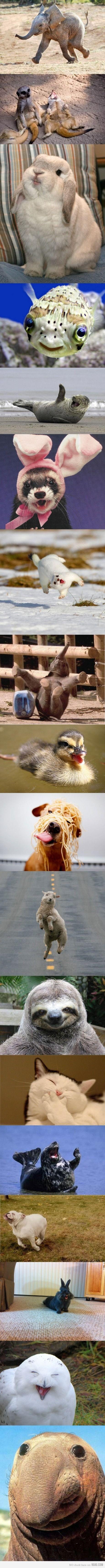 Happiest Animals