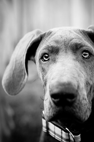 Beautiful black and white dog photography