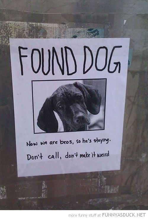 26 best Lost images on Pinterest Lost pets, Hilarious and Animal - lost dog flyer examples