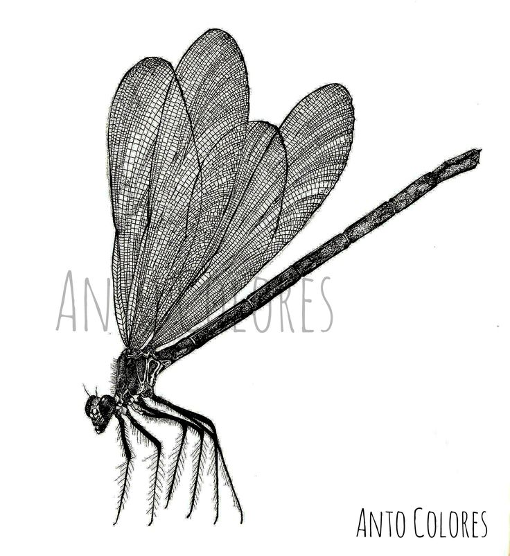 #libelula #ilustracion #illustration #dragonfly  #antocolores  www.instagram.com/anto.colores https://www.facebook.com/AntoColores/?ref=aymt_homepage_panel