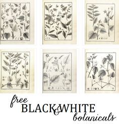 (Free) Black And White botanical prints