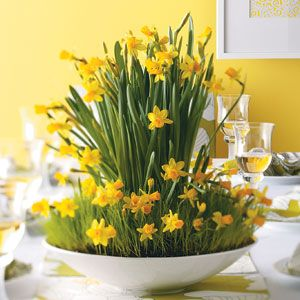 Yellow Daffodils  Use daffodil plants as a cheery Easter decorating idea or as an Easter hostess gift.