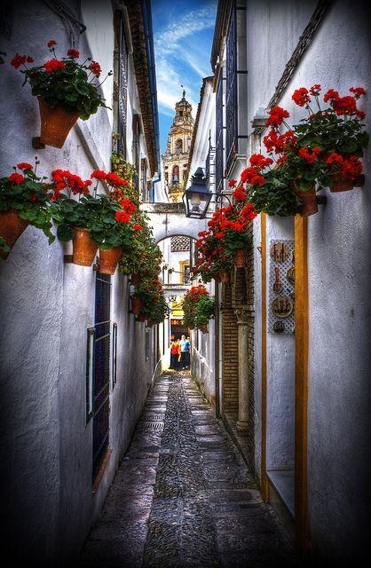 Flowers street, Cordoba, Spain