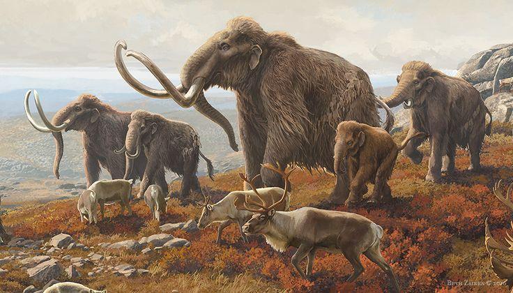 Woolly Mammoth Found In Soy Field