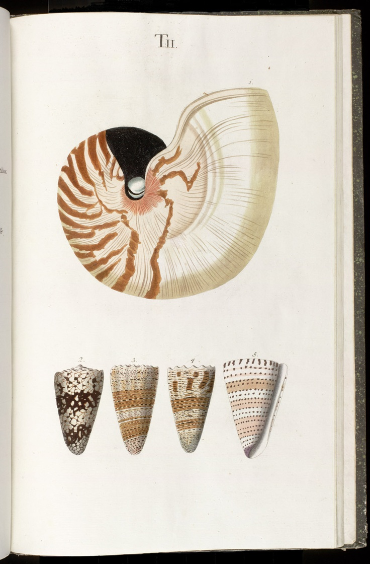 Colorful Pictures Of Seashells