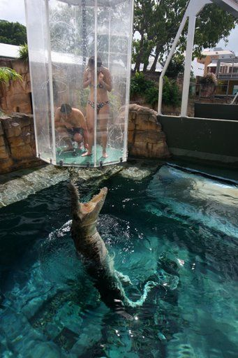 Cage of Death - Australia, Darwin Northern Territory. Who knows why anyone would want to do this. I find it sad really.