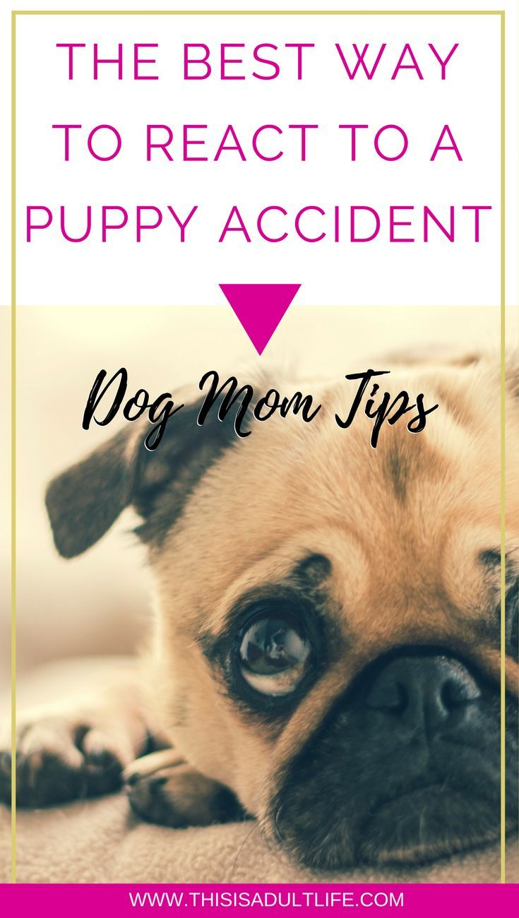 The Best Way To React To A Puppy Accident Puppy Potty Training