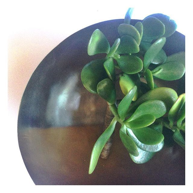 Our handcrafted horizon brass bowl is a unique way to display your gorgeous succulents #globalliving #zarparliving #brass #bowl #handcrafted #tableware #centrepiece #decorinspo #interiorinspo #homewares #sydneyliving #northernbeaches #sustainableliving