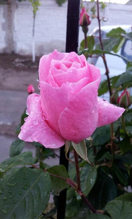 Después d la lluvia. la belleza d la primavera...