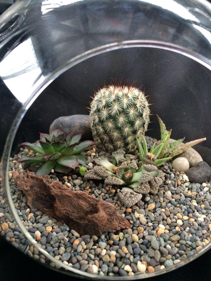 Hanging terrarium with succulents and cactus