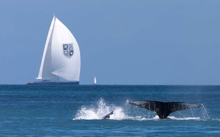 Having a whale of a time at Audi Hamilton Island Race Week #HamiltonIsland