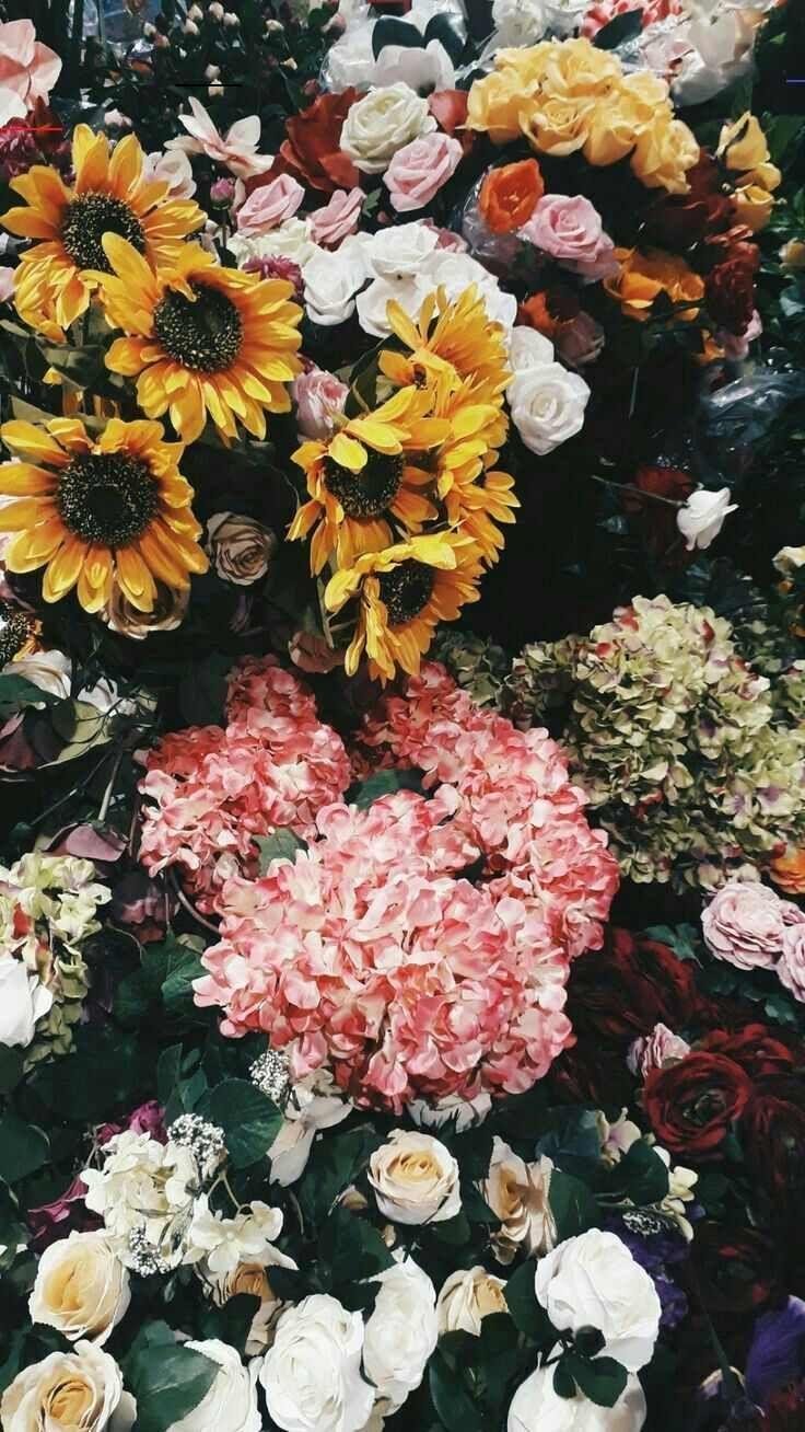 Pinterest Em Stan Blumen Flowers Pinte Blumen Natur Ideen 花 壁紙 壁紙 花 アートフォト