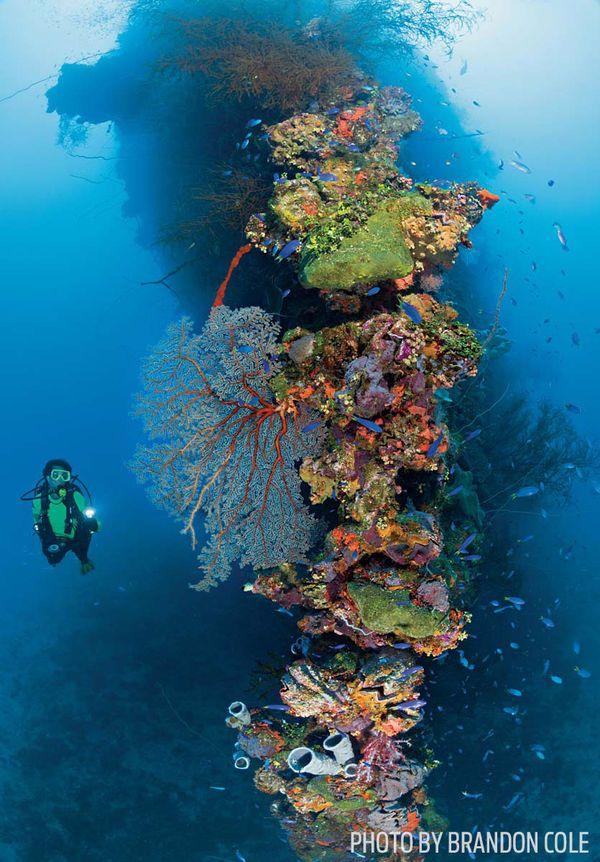 Chuuk lagoon scuba diving fujikawa maru wreck