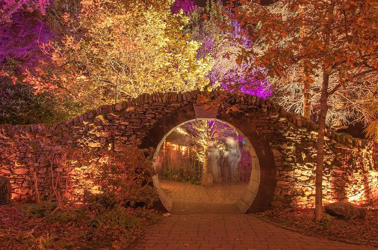 The Enchanted Forest, Pitlochry.