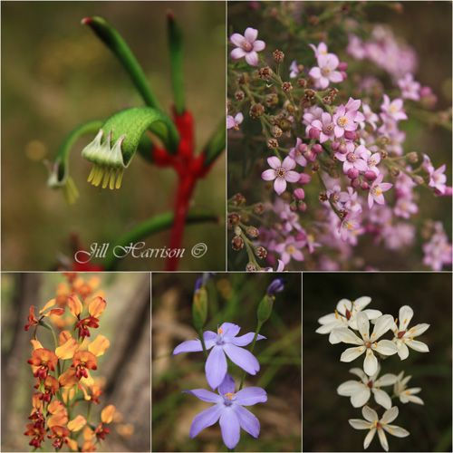 How to photograph Wildflowers. #kalbarri