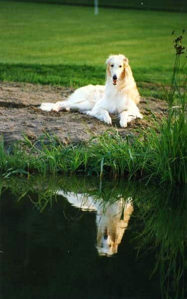 Dogs Drinking Water | Toilets, Lakes, Rivers, &amp- Puddles