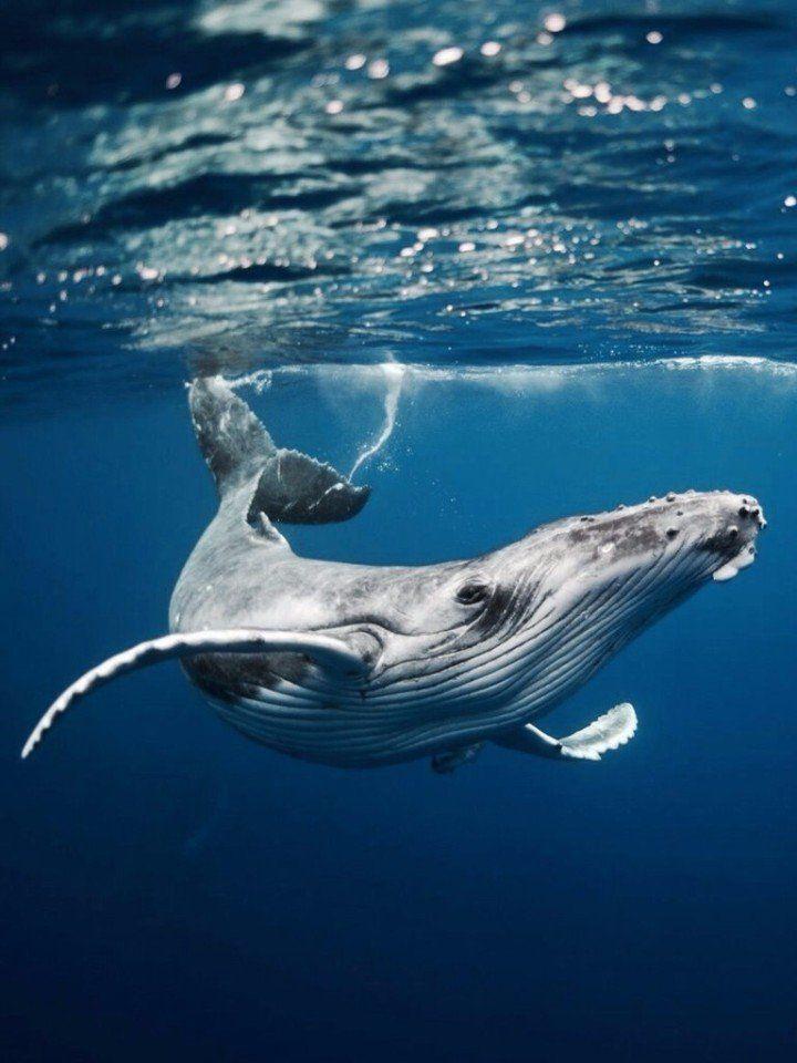 Киты в море фото